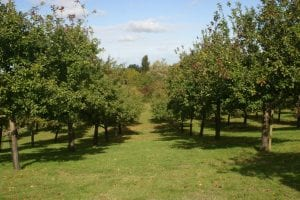 Apple Orchard in Somerset Autumn off year straight 1st Financial Group Somerset Advisers