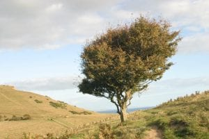Single windswept tree green tree on cliff near edge and ocean, with views to ocean beyond on further cliffs in South West England Autumn 2018 1st Financial Group South West Advisers 1