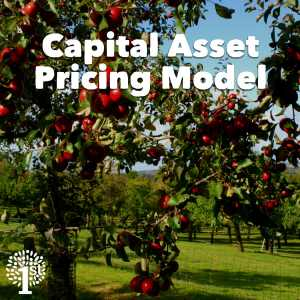 Capital Pricing Asset Pricing Model CAPM